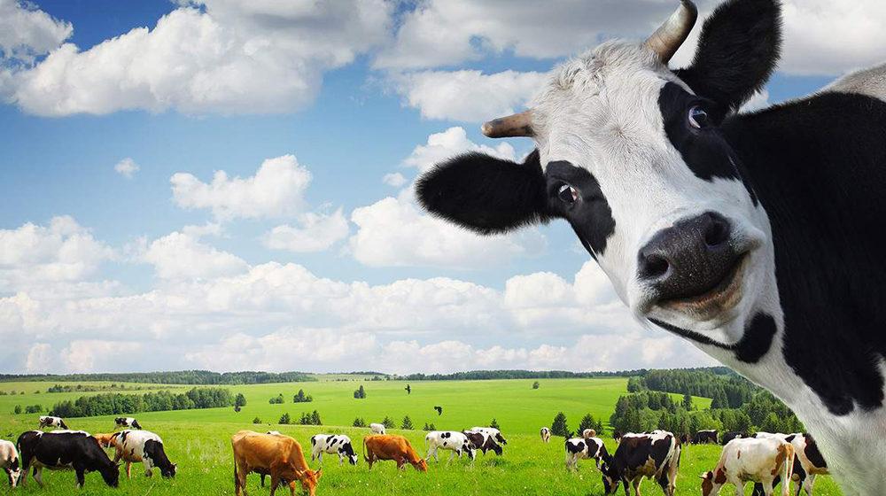 Плач по«запрещенке», или Естьли будущее уроссийской агропромышленности?